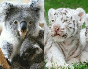 Zoo trop bien