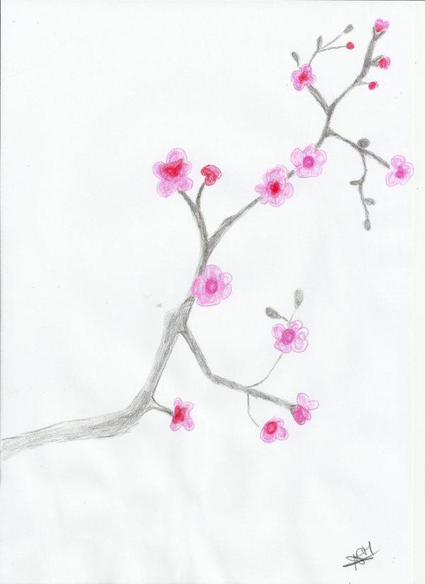 dessin de fleur  sakura