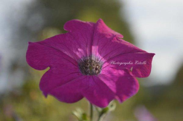 Album Faune et Flore n°1 :