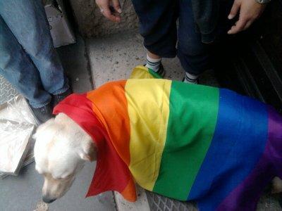 gay pride 2011 de lyon