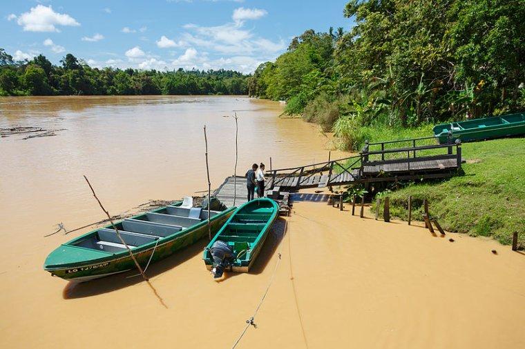 #ZoomSur... Bornéo !