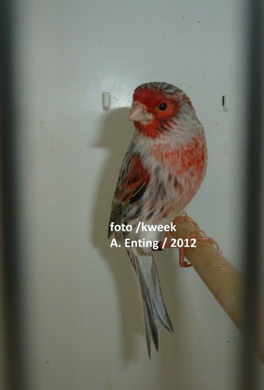 vogels 2012