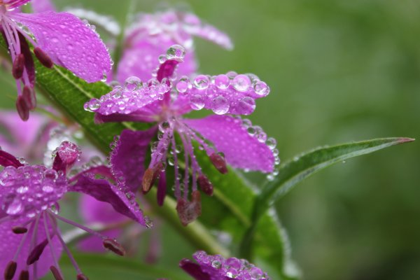 "Adage ""mauvais temps, belles photos"" confirmé"