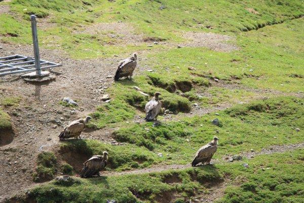 Escapade dans la vallée d'Ossau