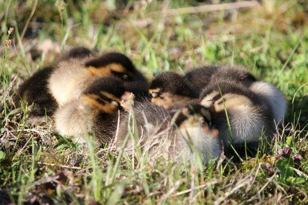 Groupir pour la sieste