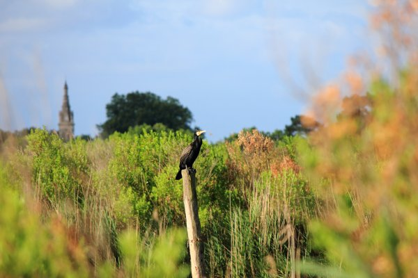 Arbre à cormorans et âme solitaire