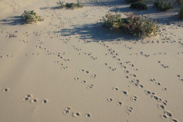 Du passage dans les dunes...