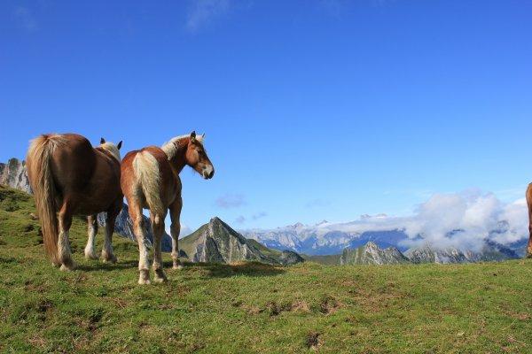 Certains contemplent le paysage, d'autre roupille ou regarde les randonneurs de haut.