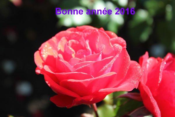 Bonne et heureuse année à tous mes visiteurs