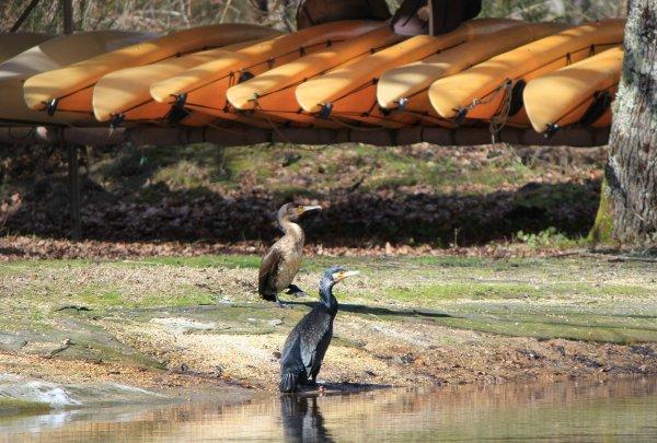 Deux clients pour une sortie en kayak