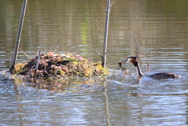 Entretien du nid (2)