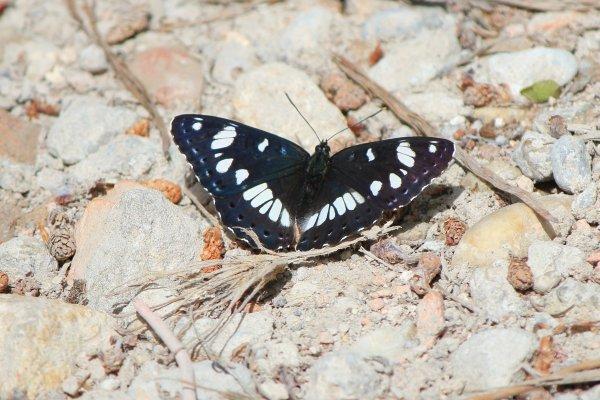 Florilège des papillons de la semaine