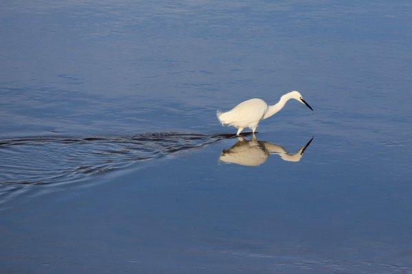 Un temps à aller à la pêche...aux images