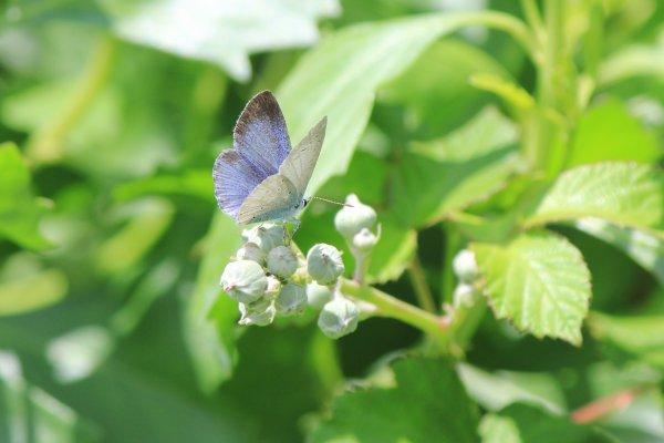 Les papillons étaient aussi de sortie, Dimanche