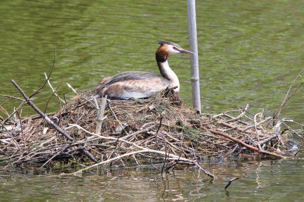 Abandon du nid