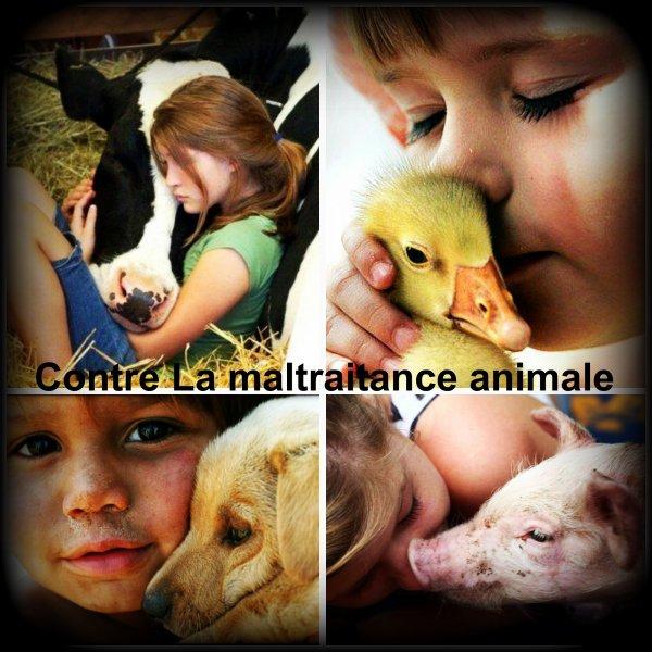 Retrouvez moi sur ma page facebook : Contre La maltraitance animale