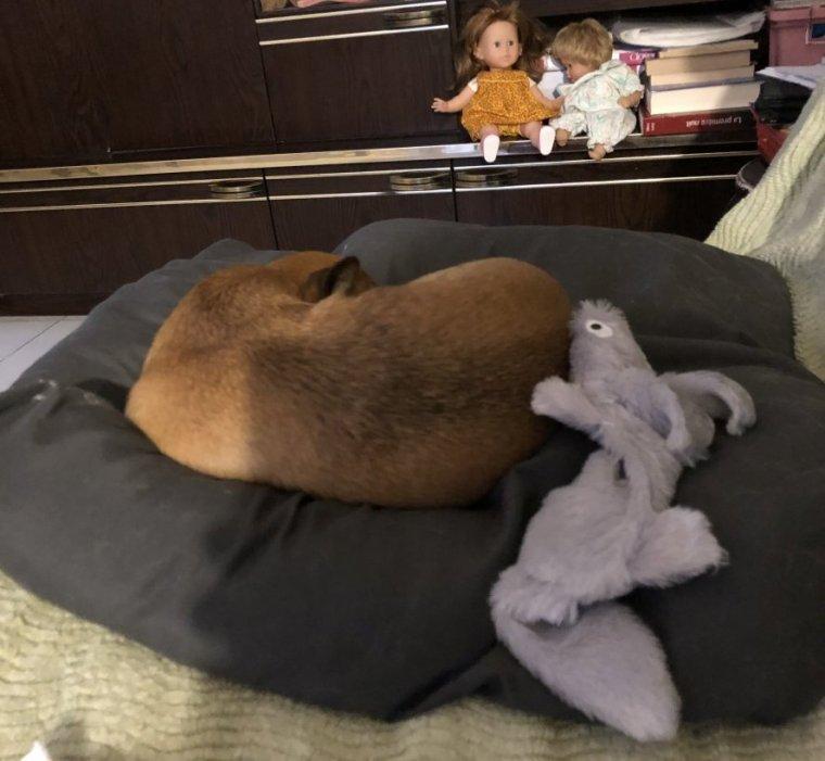 Ponyo à la maison suite