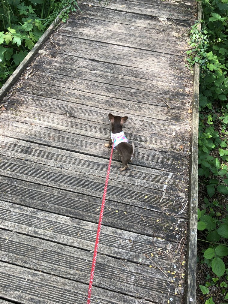 première sortie en forêt