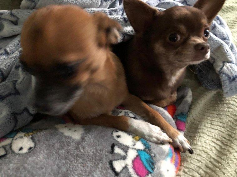 Jaya et Ponyo