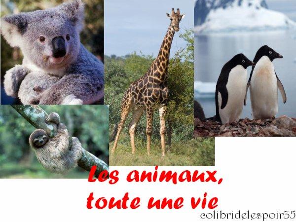 Les animaux, toute une vie !