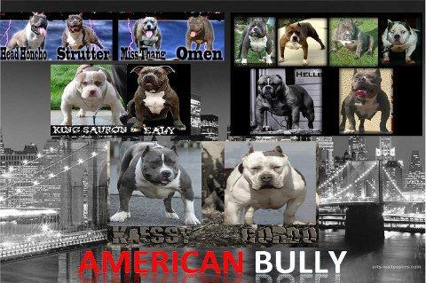 bully disponible tres bonne lignier