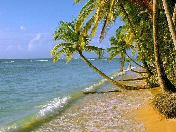 Envie de soleil et de vacances !