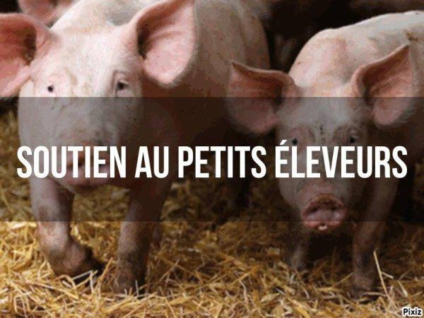 BELGIQUE - Peste porcine sangliers