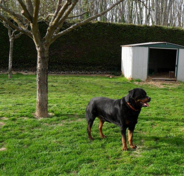 Béno fait le jardin !!!!!!!!