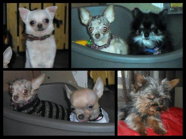 Nos PETITS chiens :)