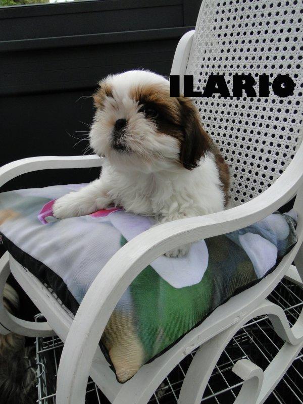 Ilario (pas a vendre)