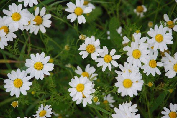 Modèle : Fleurs