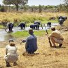 Budget Tanzania Safari Introduction