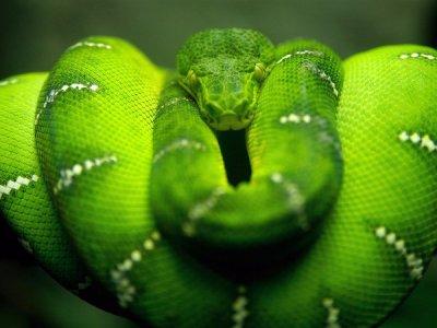 serpent !!