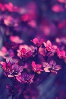 Tu vois ces fleurs ? Bah ma vie est pareil tu commence a naître a grandir à t'épanouir avoir le sourire être illuminer sentir l'air la nature voir tous ce que tu aime et puis un jours tout bascule tu devient fade tu fane tu te lasse tu n'a plus le goût de rien tu a envie de partir et un jour sa arrive et c'est toi qui te renferme comme tu as éclos ..