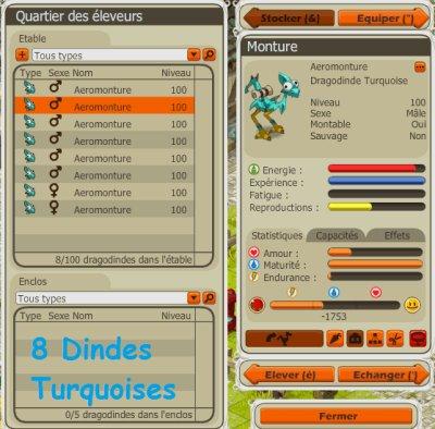 Acquisition de 8 dindes Turquoises !