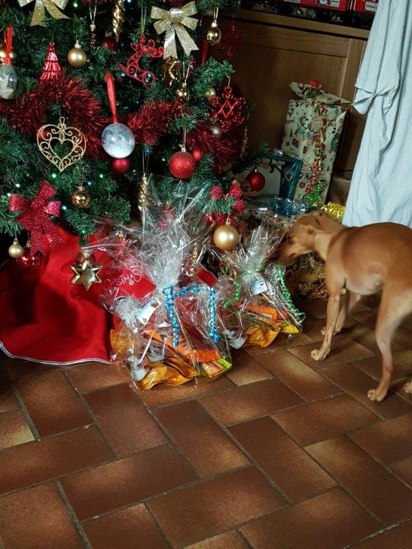 Maya a trouvé son cadeau...