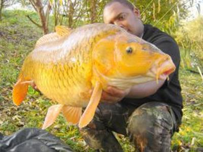 Carpe koi de 13kg fred carpiste du 95 for Mini carpe koi