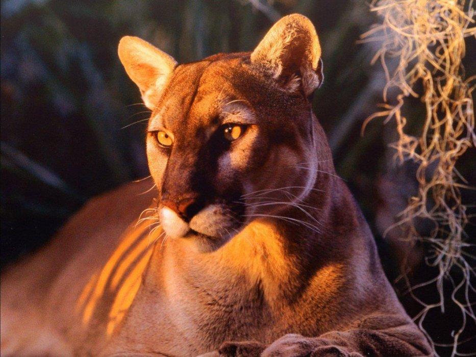 maman leonie
