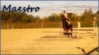 Maestro. ♥