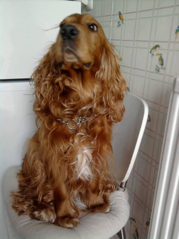mon chien snoopy