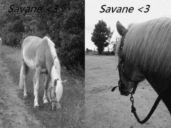 "I meet her ..     of   ""Savane"""
