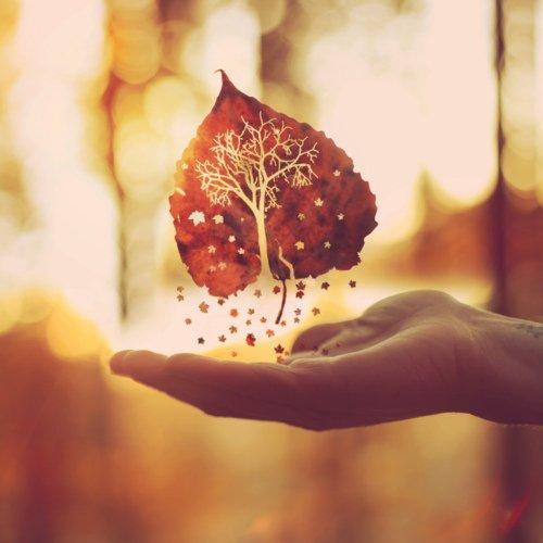 ~ Voyage à travers les légendes d'automne grâce au Pumpkin Autumn Challenge ! ♥