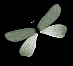 suite kit tuto demoiselle fleur