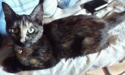 Darmia, ma 2ème chatte