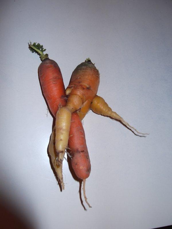 L'amour chez mes amies les carrotes ... Je les adore ...