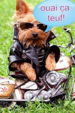 Le chien motard lol !!