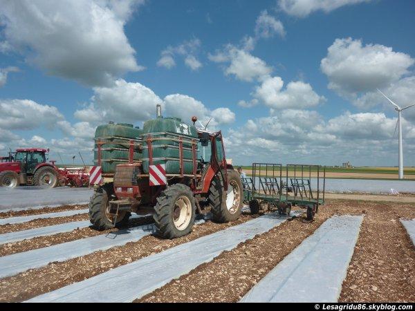 Plantation du melon 2012