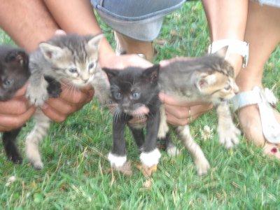 les chaton de titi qui a disparue :(