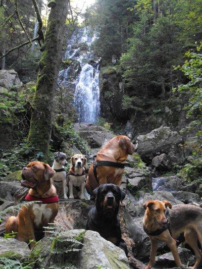 les chiens et la grande cascade