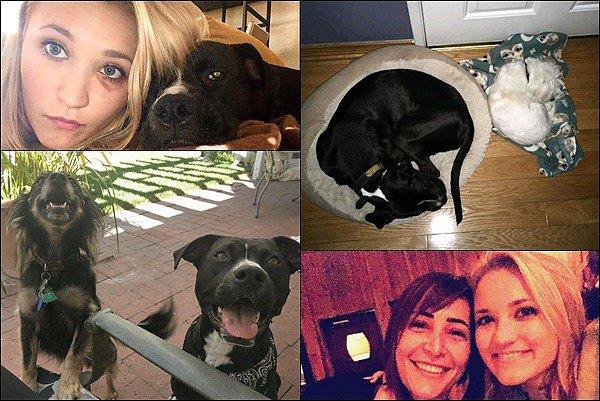 Fin août 2016 - Emily a posté de nouvelles photos sur Instagram, entre autre de ses chiens ♡